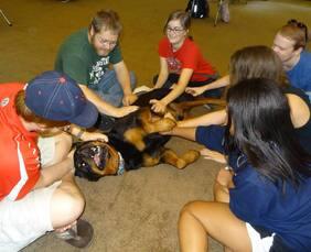 Hamilton Dog Training We Train You To Train Your Dog Hamilton